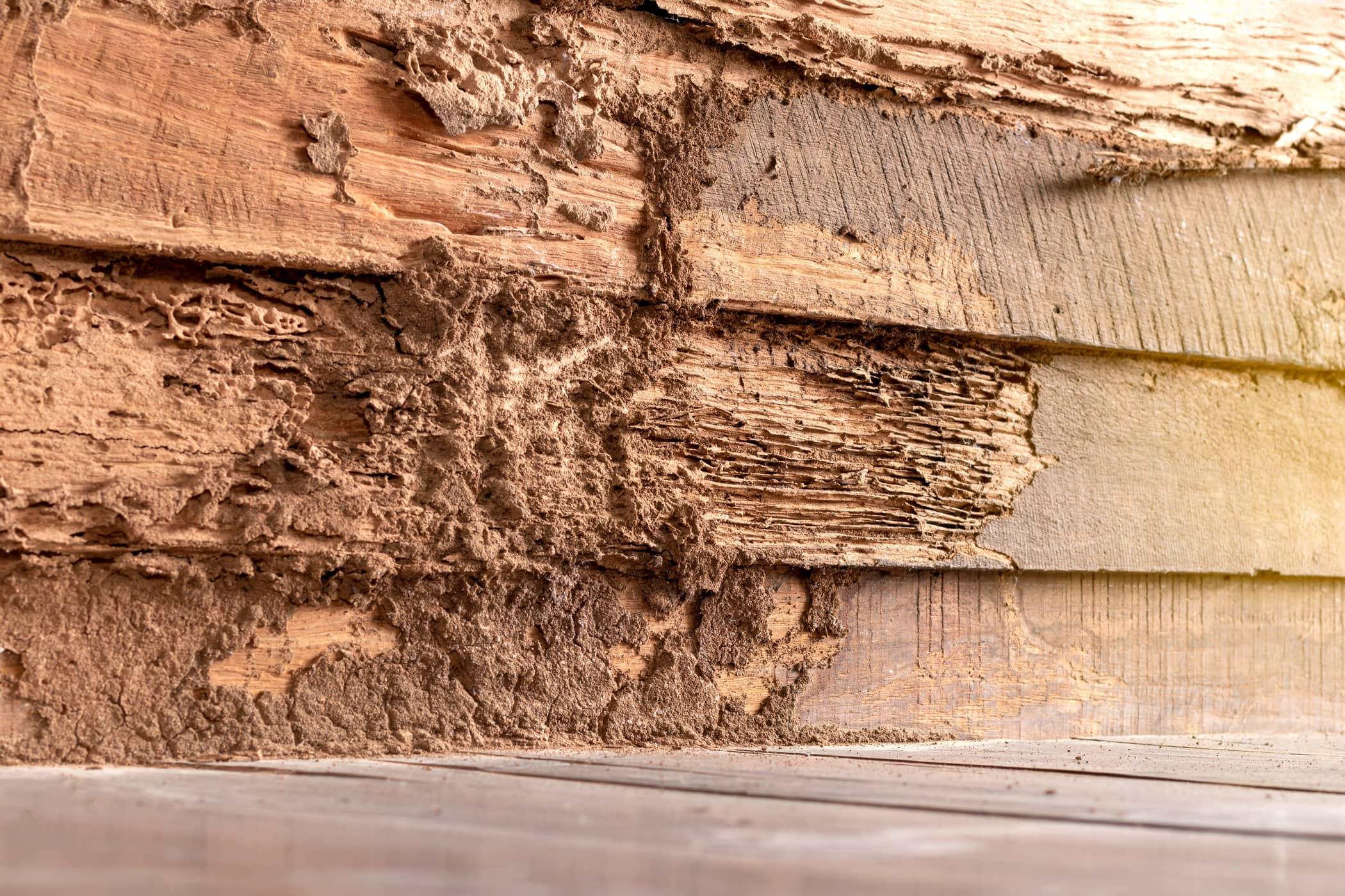 Termite Inspection Houston TX